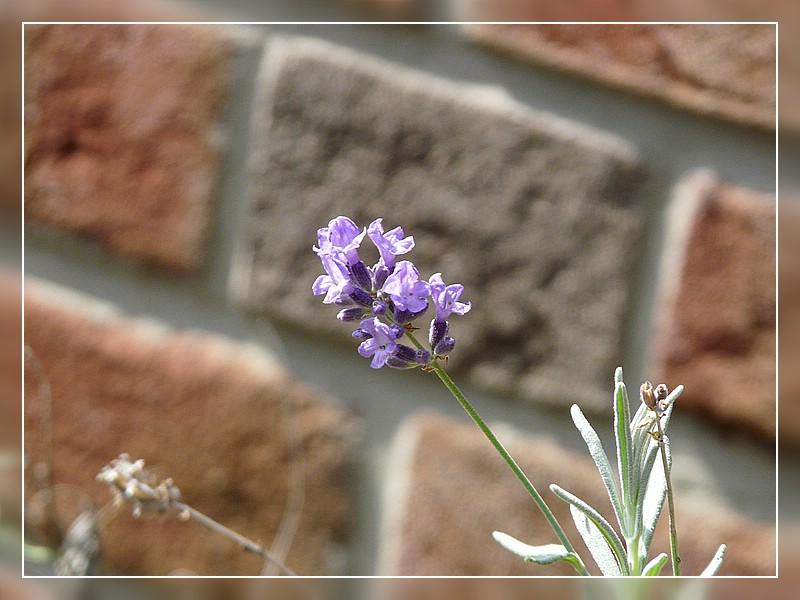 Gefundene Blüte