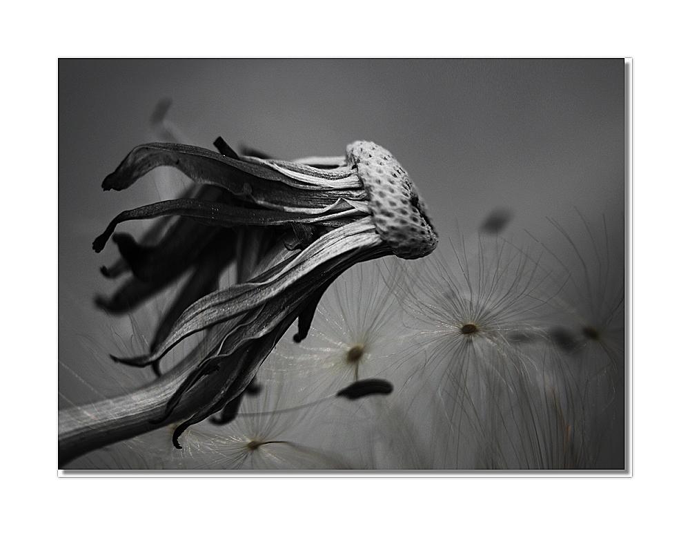 """"""" Gegen den Wind """""""