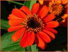 Gegen den Winterblues - Schönes Wochenende für Euch !