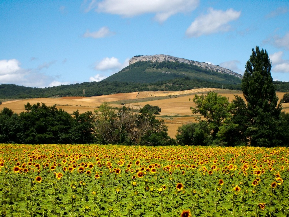 Gegend bei Genevilla, Navarra