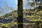 ....Gegenlicht... von zirbenwald