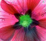 Gegenlicht-Blüte