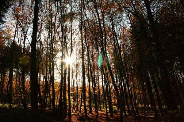 Gegenlicht im Herbst