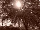 Gegenlicht im Park