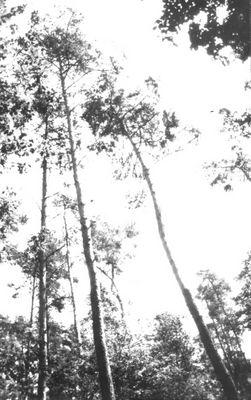 Gegenlicht Wald