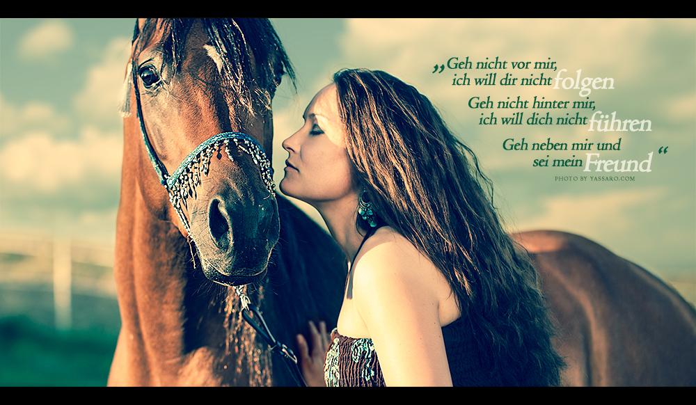Buck Brannaman Zitat Wandtattoo Spruch Das Pferd Bleibt Dir