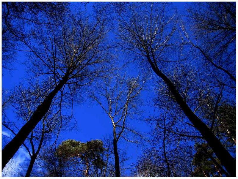 Geheimnis der Bäume