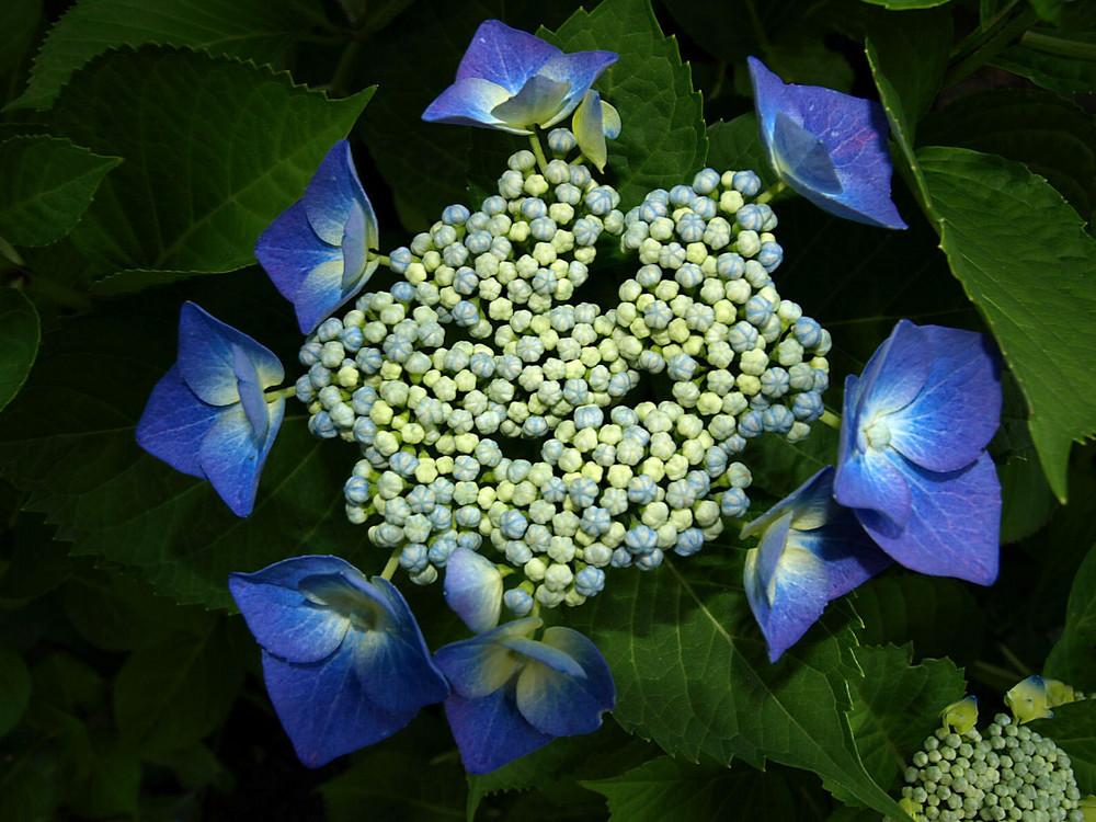 Geheimnisvolle Blüten