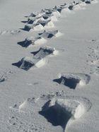geheimnisvolle Spuren im Schnee