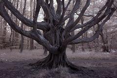 Geheimnisvoller Baum