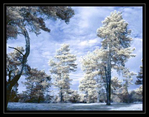 Geheimnisvoller Wald [2] <> [reload]