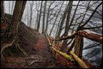 Geheimnisvoller Wald IV