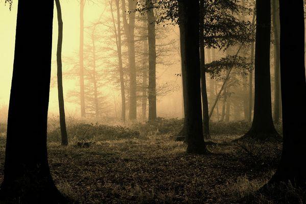 ...gehetzt, oder auf der Suche nach der Wirklichkeit...