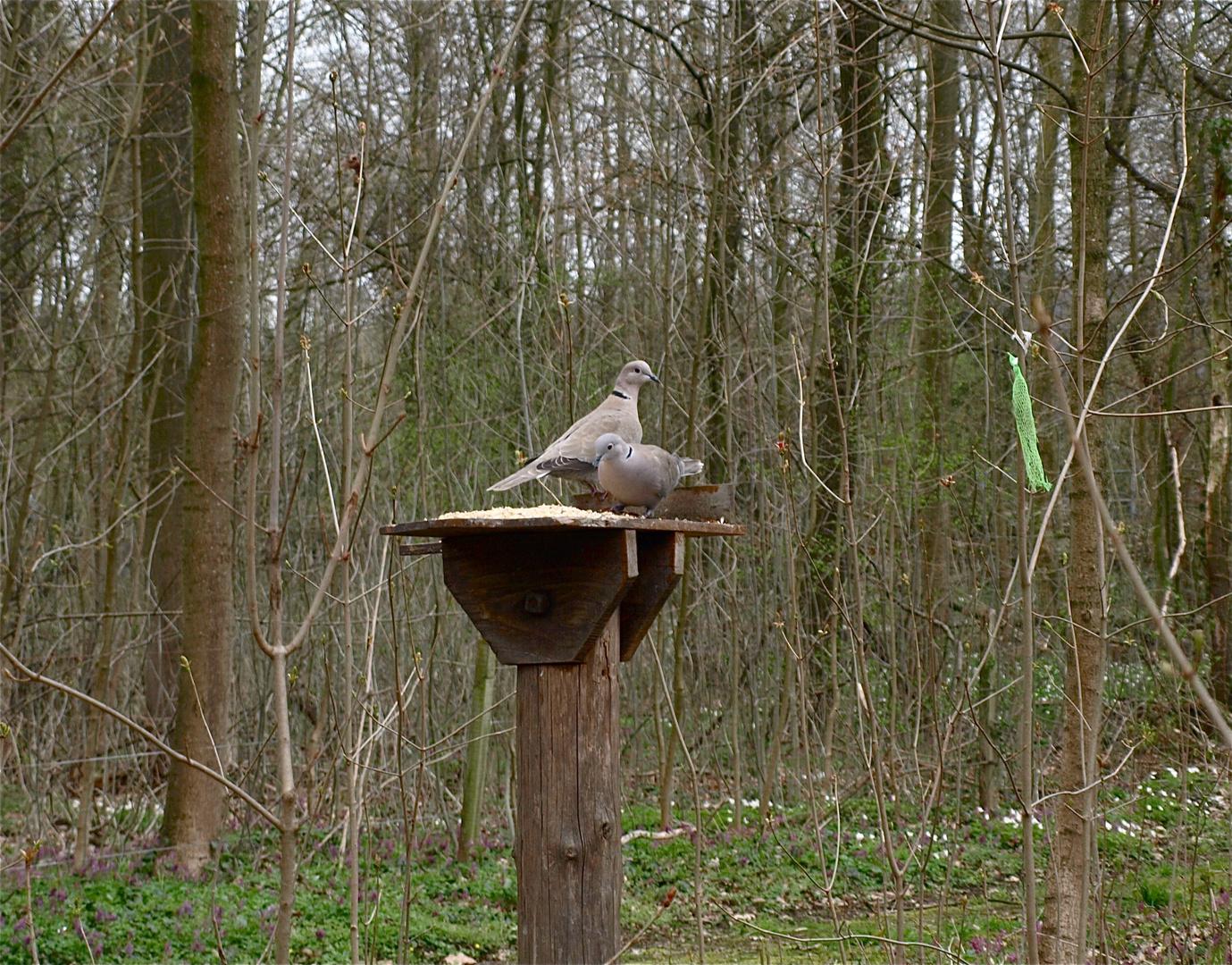 Gehn wir Tauben vergiften im Park:-))))