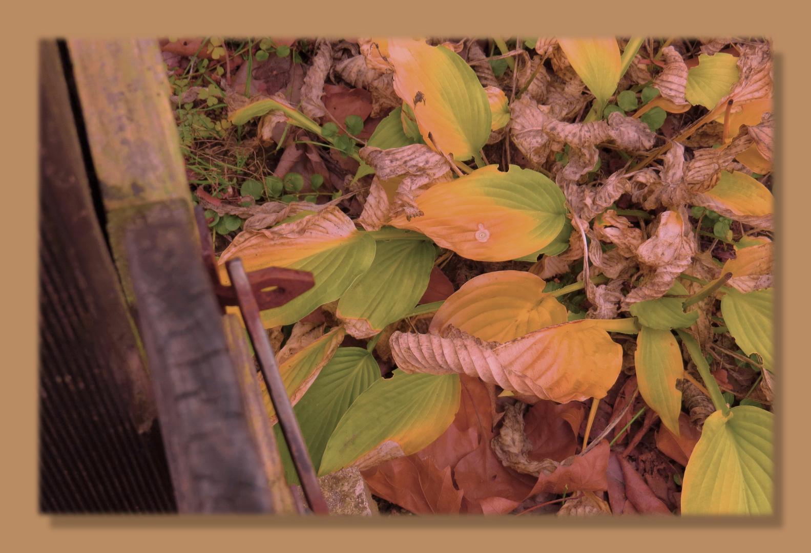 gehört zum goldenen Herbst,