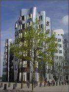 Gehry Haus im Medienhafen