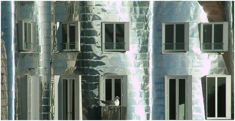 Gehry-Möve