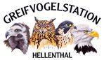 Geier, Uhu, Wanderfalke und Weißkopfseeadler (von links)