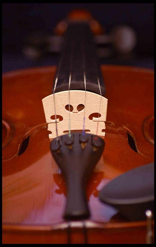 Geige 4
