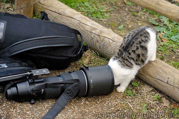 """""""Geil - das 200-400 4.0 von Nikon, leider ohne Makro"""""""