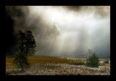 Geist des Waldes