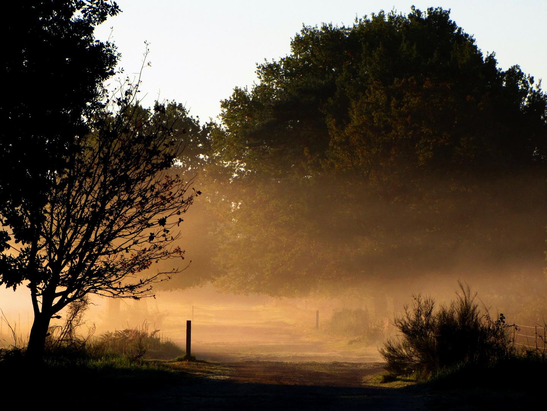 Geisterbusch (Wahner Heide)