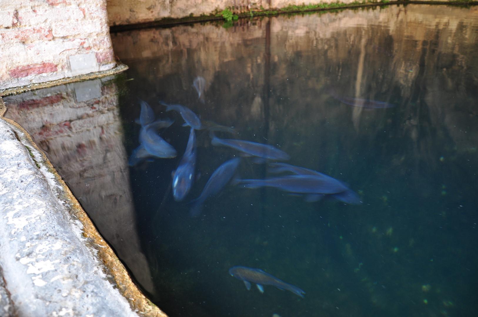 Geisterfische in der Wasserzisterne
