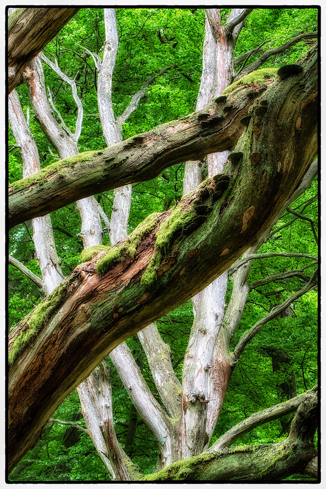 Geisterholz