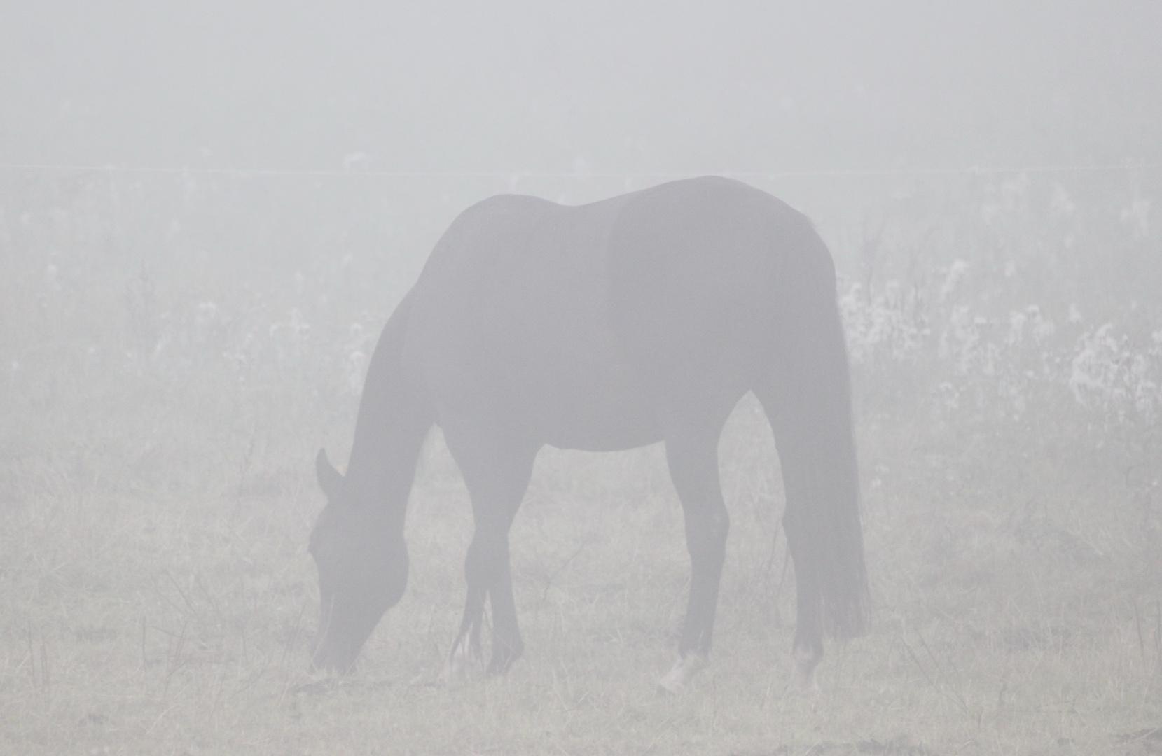 Geisterpferd
