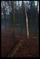 Geisterwald 01