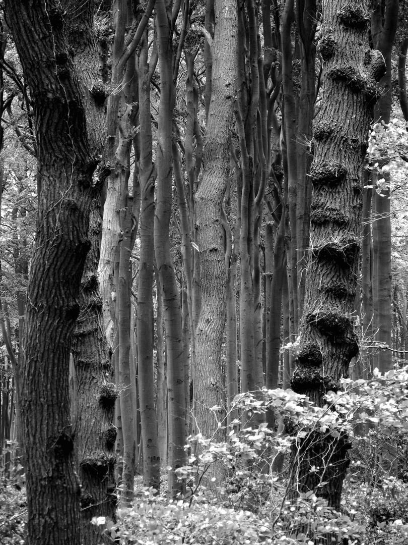 Geisterwald.....