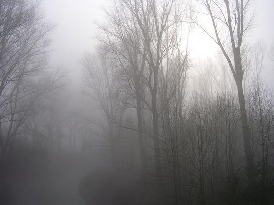 Geisterwald...