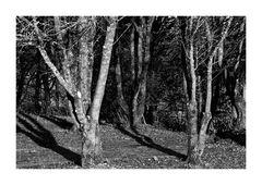 Geisterwald im Schwabenland