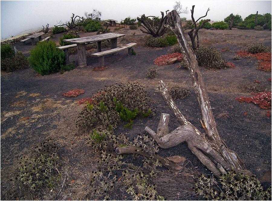 Geisterwald - Lanzarote