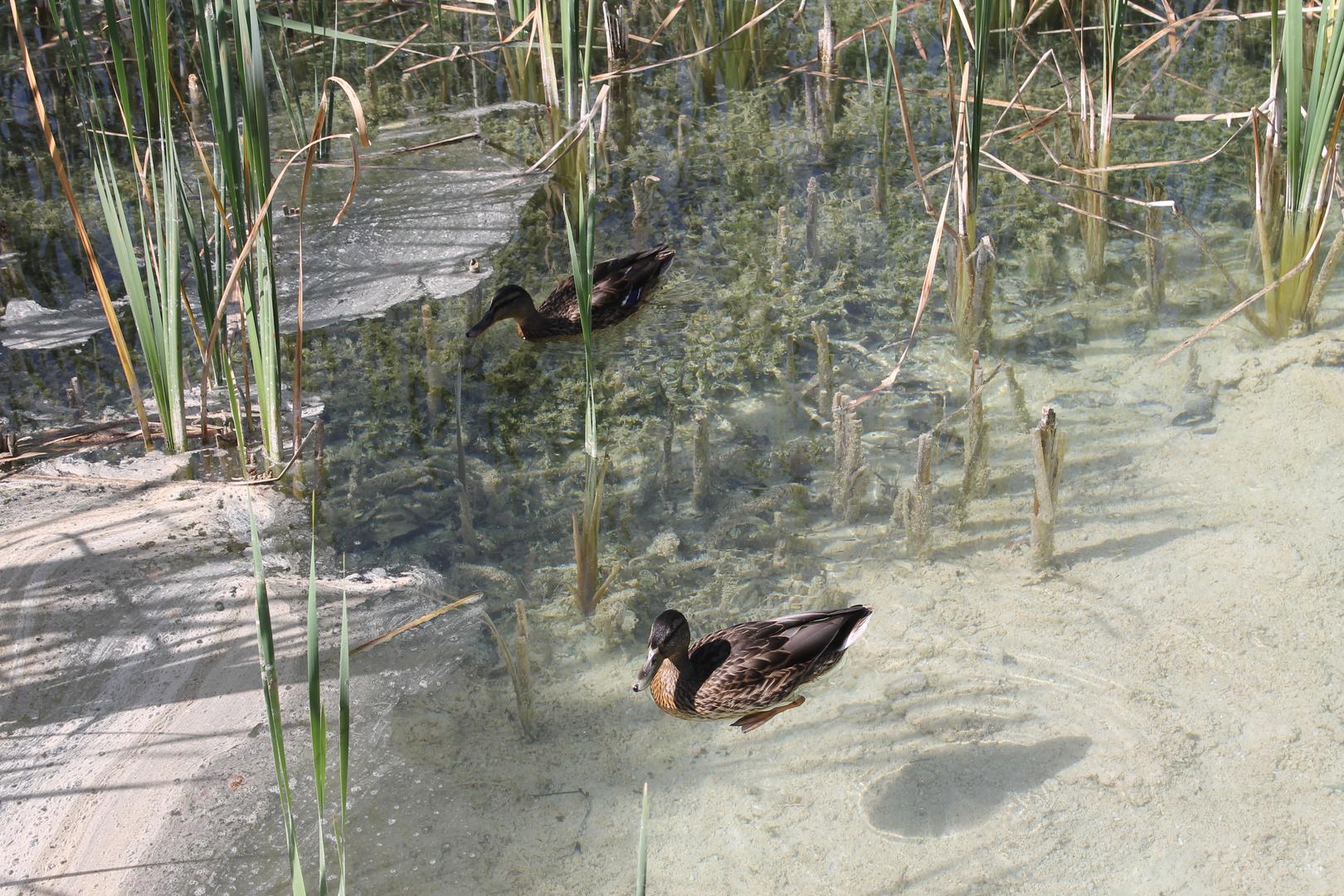 Geknipst in Kroatien Nationalpark