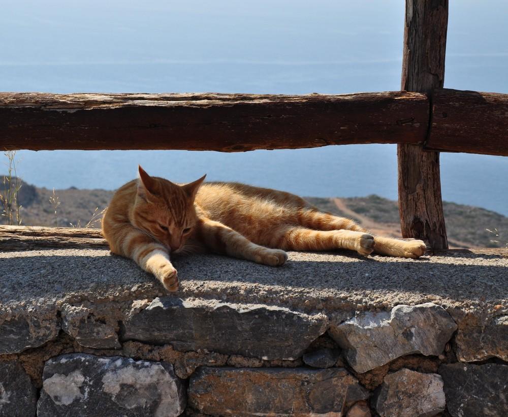 Gelangweilte Katze bei Preveli / Kreta 2009