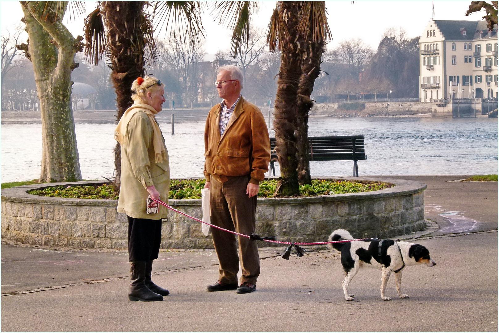 Gelangweilter Hund (im Bild rechts unten)