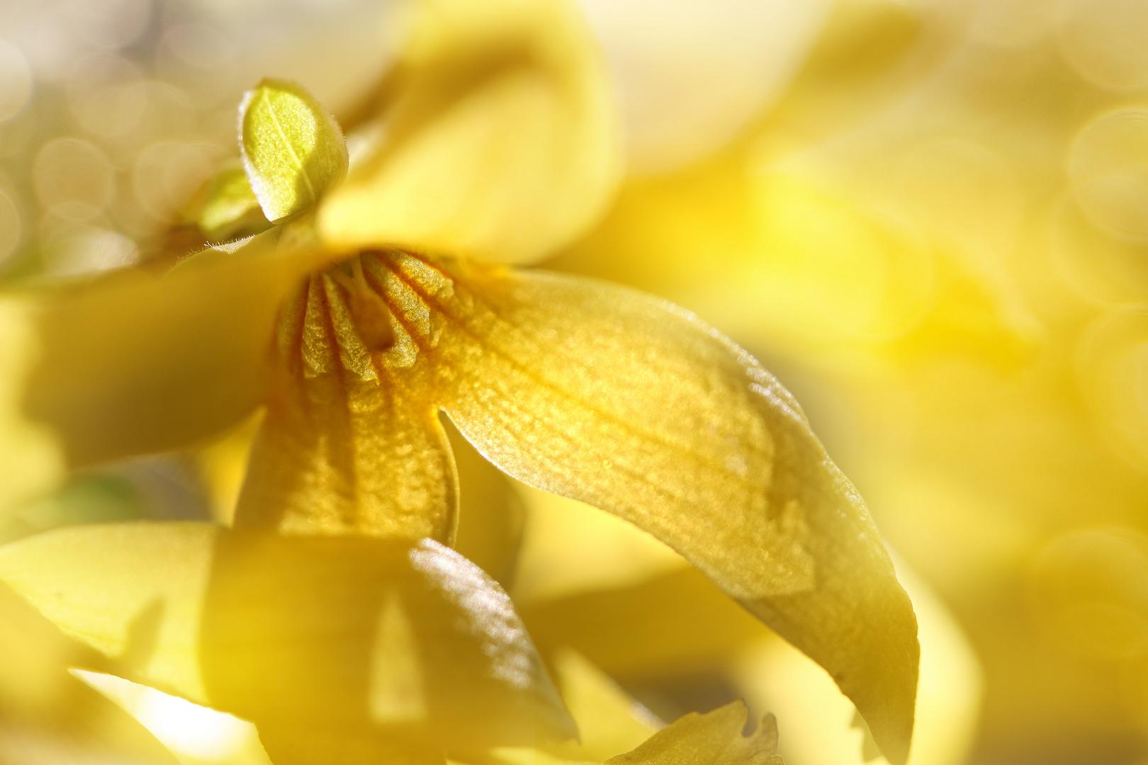 Gelb allein macht nicht glücklich ....