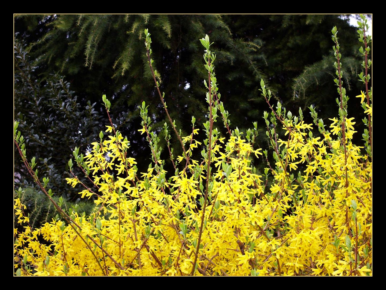 Gelb auf Schwarz