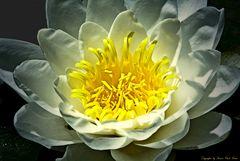 Gelb auf weiß