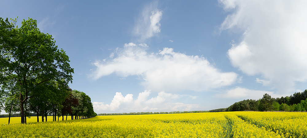Gelb - Blau - Grün an Wolken