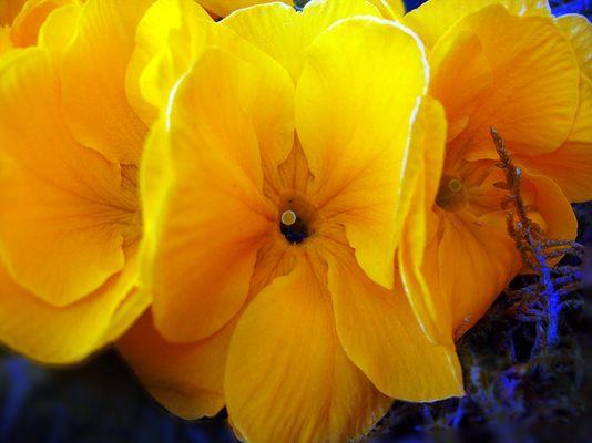 Gelb blause Wunder