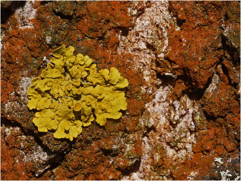 Gelb, eingerahmt von Rot