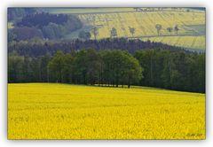 gelb-grüne Landschaften