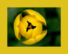 Gelb im Garten Version 1