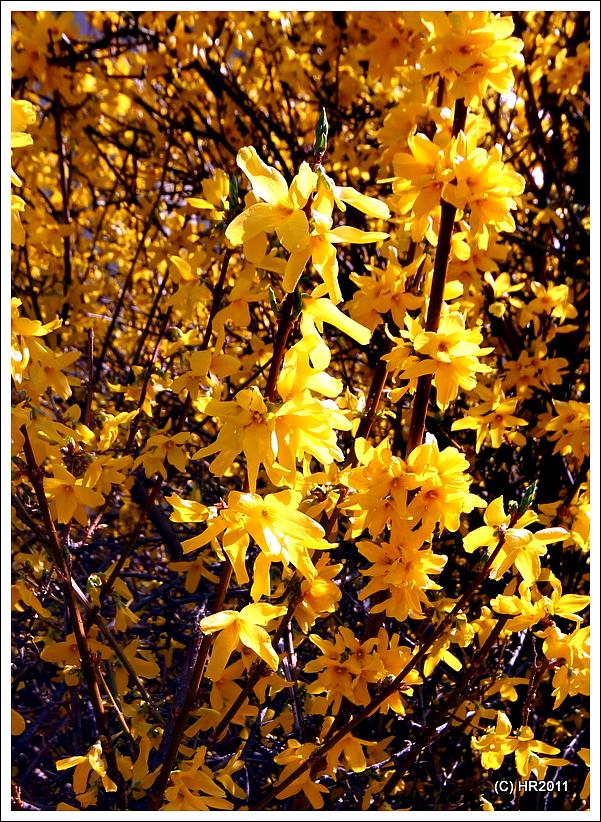 """""""gelb"""" ist das nicht schön?"""