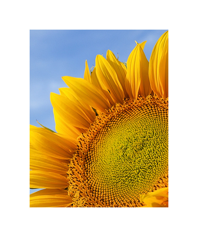 Gelb ist die Farbe der Sonne