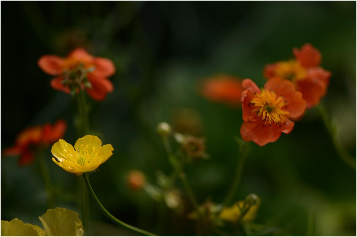 gelb - orange