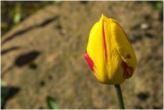 Gelb-Rot