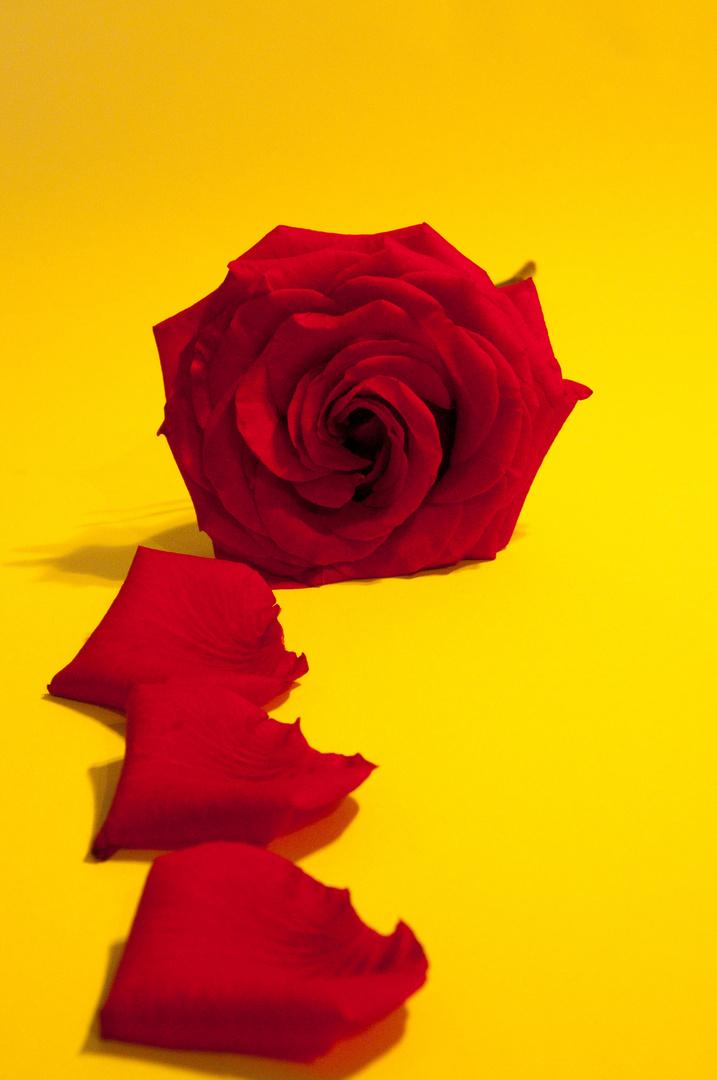 Gelb Rot